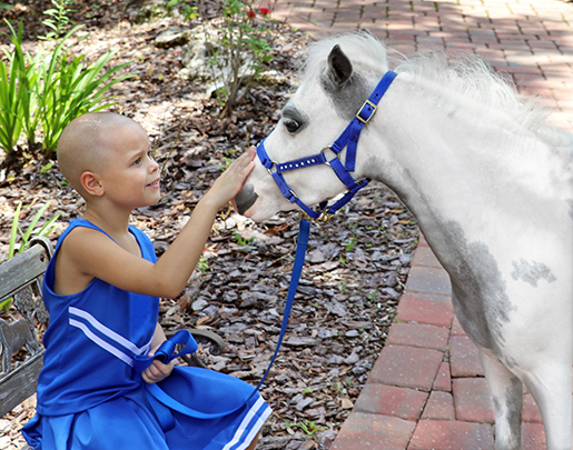 Gentle Carousel Therapy Horses